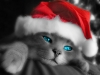 New_Year_wallpapers_Santa_cat_011583_.jpg