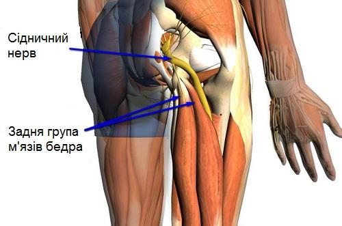 Боль в задней мышце бедра