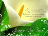 New_Year_wallpapers_Congratulations_to_the_New_Year_011351_.jpg